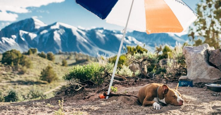 A dog lazing underneath an umbrella in the sun
