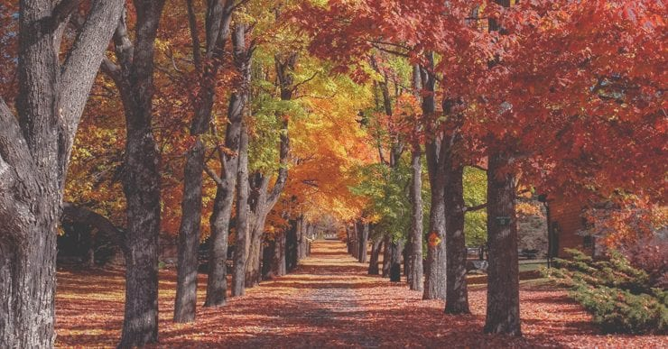 Vaping Tips For Autumn and Autumnal Flavors of E-Liquid | blu